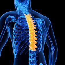 Spine - Thoracolumbar spine